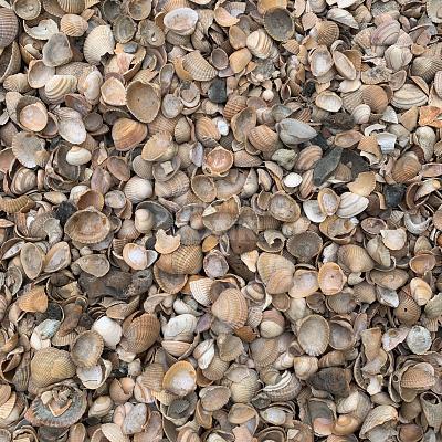 schelpen gewassen isolatieschelpen tuinpad